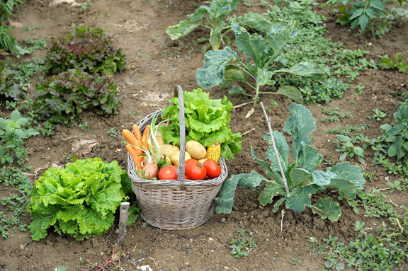 Edible Gardens and Less Lawn Are Top Garden Trends in 2010 | REALNEO ...